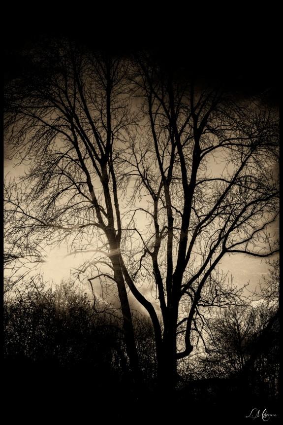 shadowy-silhouette